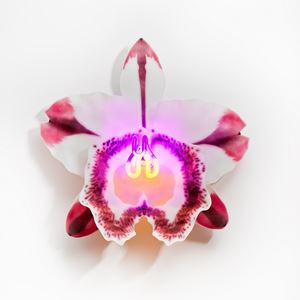 wall-mounted fused and sculpted glass art of flower in white red pink and purple neon