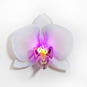 wall-mounted fused and sculpted glass art of flower in white and purple neon