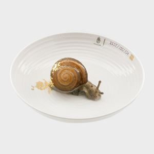 modern minature art sculpture with porcelain and snail