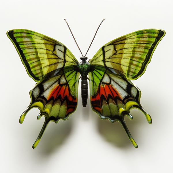 Kaiser I Hind Butterfly
