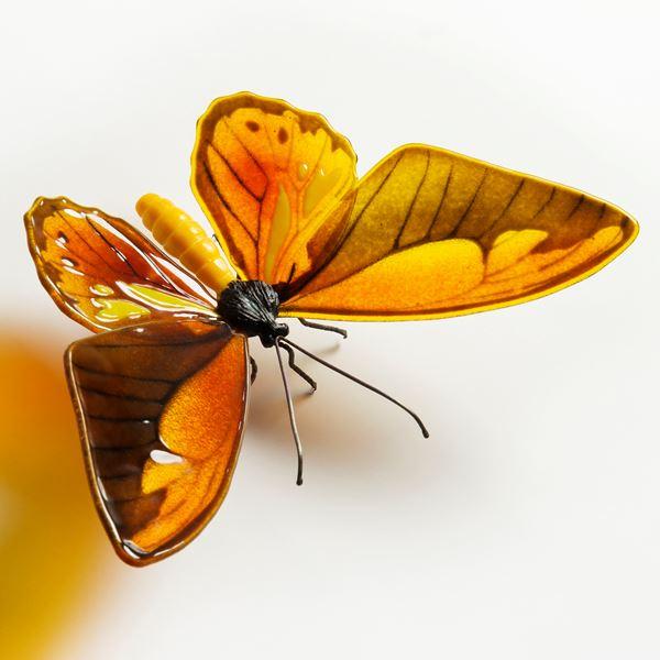 Wallace's Golden Birdwing Butterfly