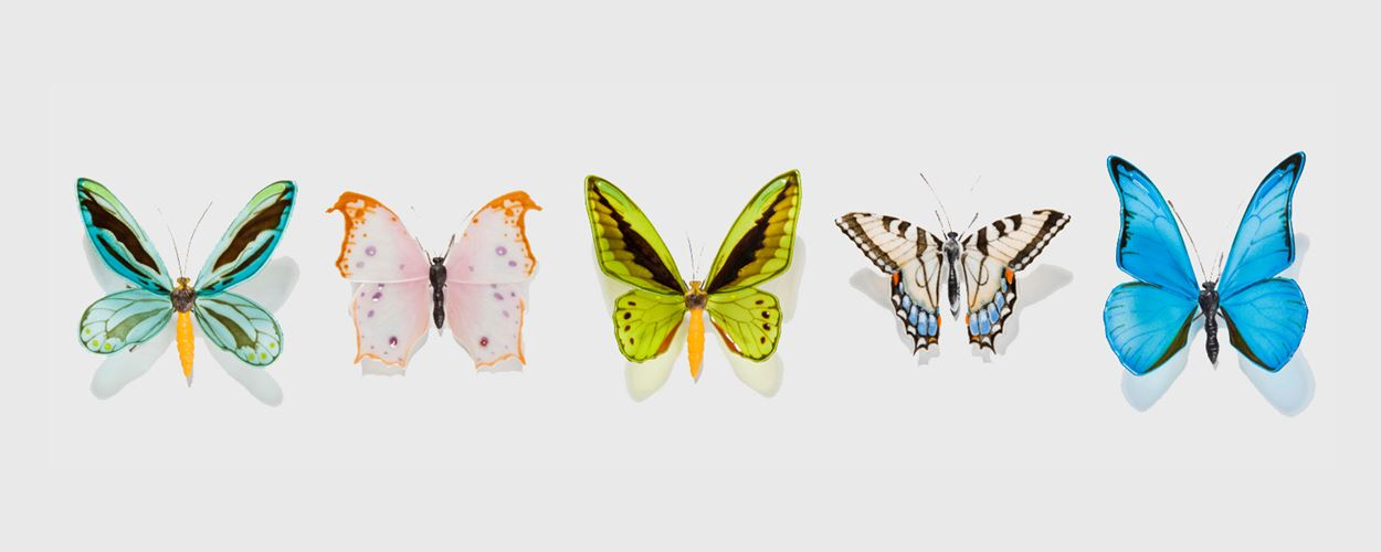 Lepidoptera by Laura Hart